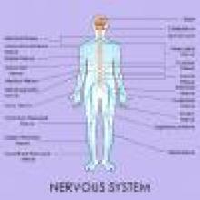 peripheral nerve damage causes